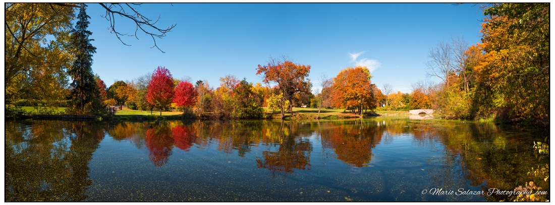 autumn fall pond colors beauty nature afternoon landscape peace calm reflexion